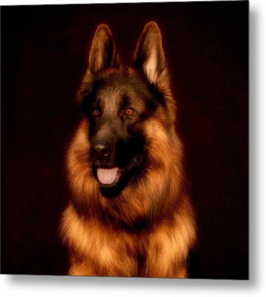 German Shepherd Portrait Metal Print