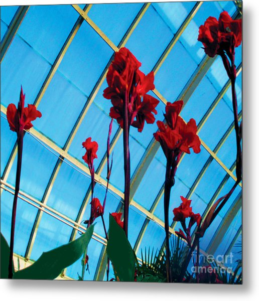 Giant Canna Lilly Metal Print