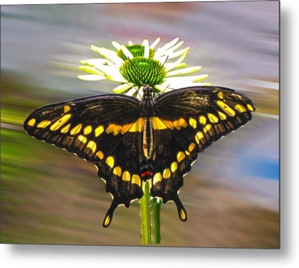 Giant Swallowtail 2 Metal Print