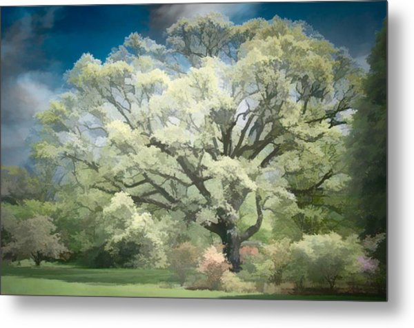 Giant White Oak Spring Metal Print