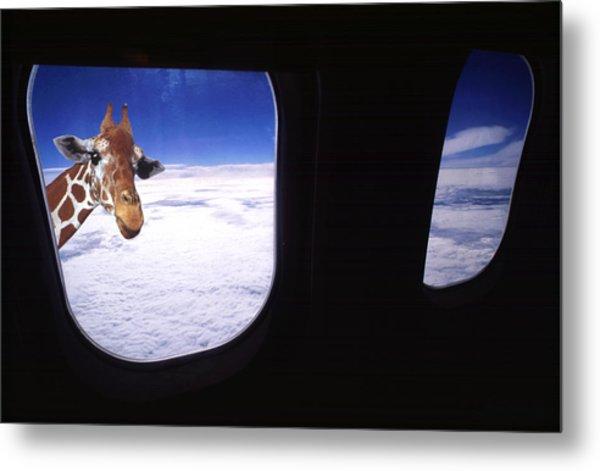 Giraffe At Window Metal Print