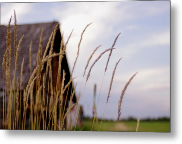 Glancing Back At A Memory Metal Print by Kelly Reich