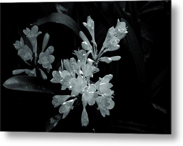 Gleaming Flowers Metal Print by Rick Bragan
