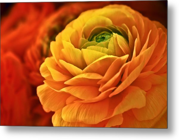 Glistening Blossoms Metal Print by Donna Pagakis