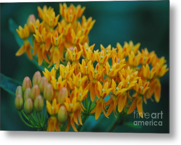 Glorious Colors Metal Print