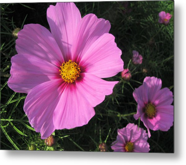 Glowing Cosmos Metal Print