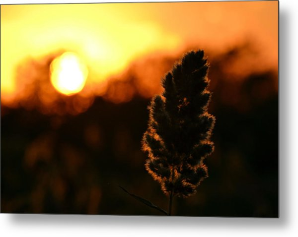 Glowing Leaf Metal Print