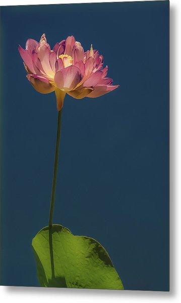 Glowing Lotus Metal Print by Jill Balsam