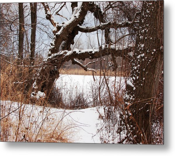 Gnarled Tree By Lake Chipican Metal Print