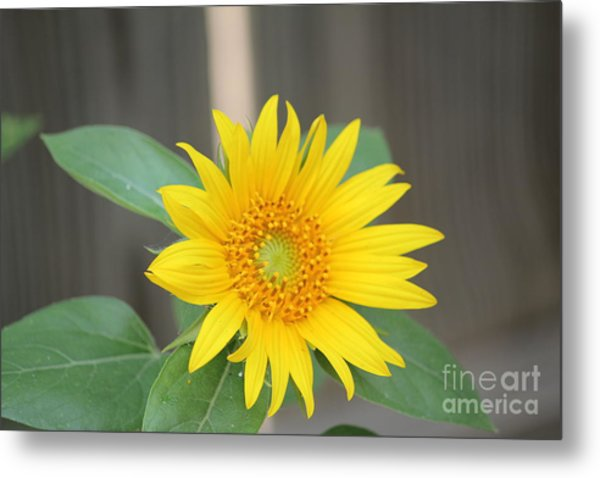 God's Sunflower Metal Print