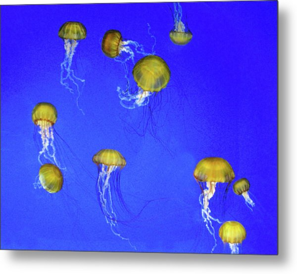 Gold Jelly Swarm Metal Print