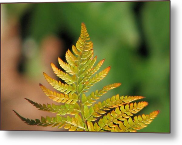 Golden Metal Print by Chris Anderson