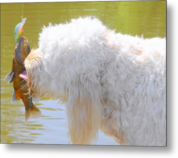 Golden Doodle And Goggle Eye Metal Print by Betty Berard