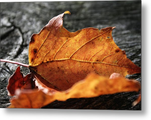 Golden Leaf Metal Print