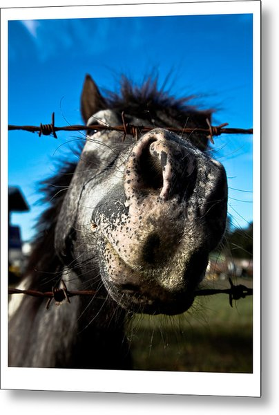 Golly A Curious Horse Metal Print