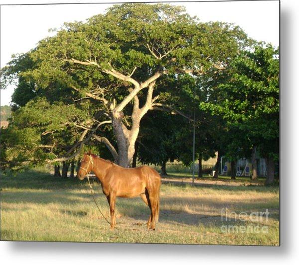 Good Horse At Dawn  Metal Print by Laurel Fredericks