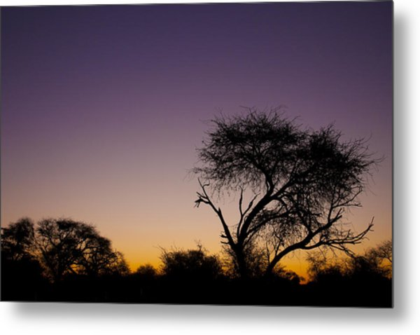 Good Morning Africa  Metal Print
