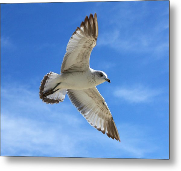 Graceful Seagull Metal Print