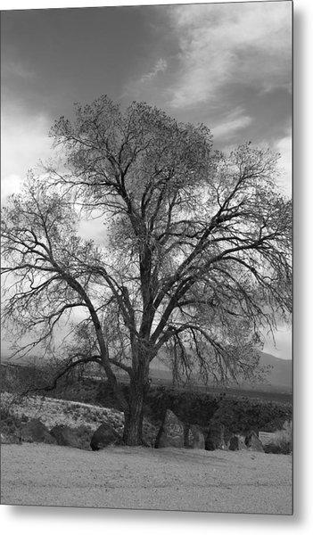 Grand Canyon Life Tree Metal Print