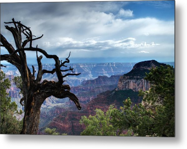 Grand Canyon North Rim After A Storm Metal Print by C Thomas Willard