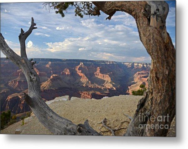 Grand Canyon Tree Metal Print