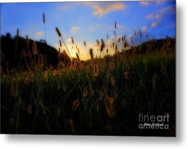 Grass In Field At Sunset Metal Print by Dan Friend