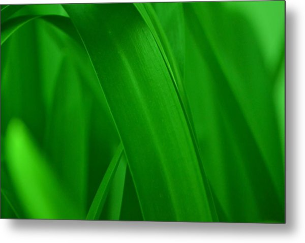 Grass Metal Print by Naomi Berhane