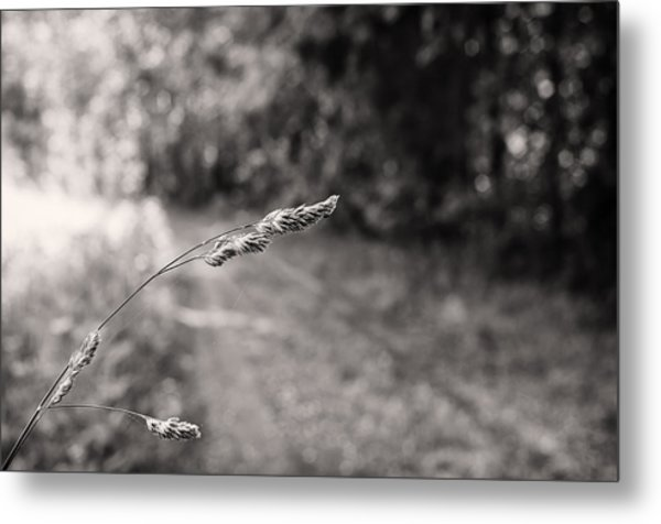 Grass Over Dirt Road Metal Print