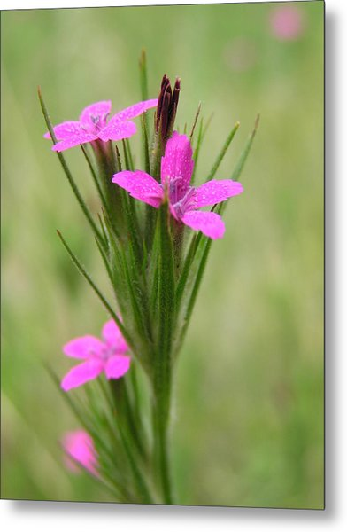 Grass Pink Bouquet Metal Print