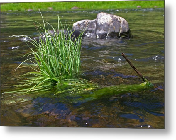 Grass Rock Stick Metal Print