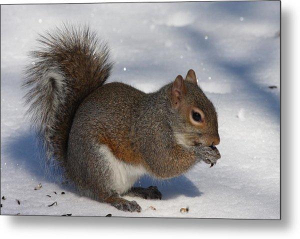 Gray Squirrel On Snow Metal Print
