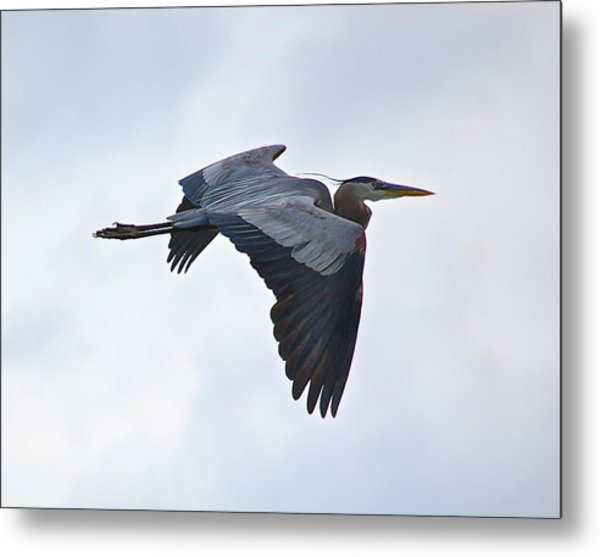 Great Blue Heron In Cloudy Sky Metal Print