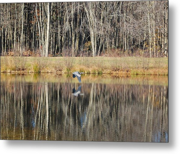 Great Blue Heron In November Metal Print
