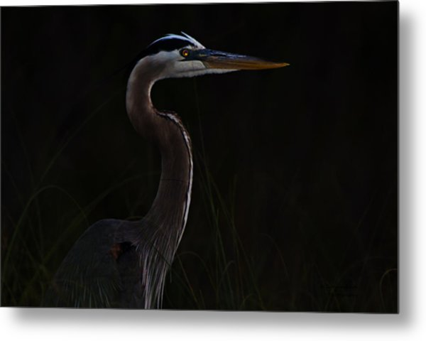 Great Blue Heron In The Sea Oats Metal Print