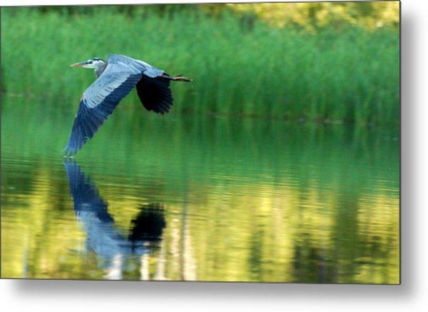Great Blue Heron On Golden Pond Metal Print