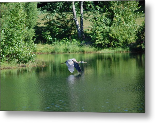 Great Blue Heron's World Metal Print