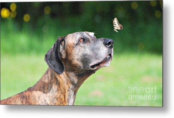 Great Dane Rufus Dagoofus With Butterfly Metal Print