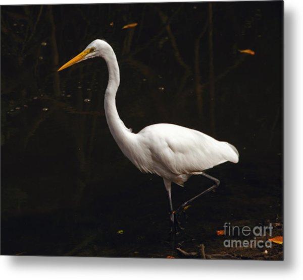 Great Egret Hunting Metal Print