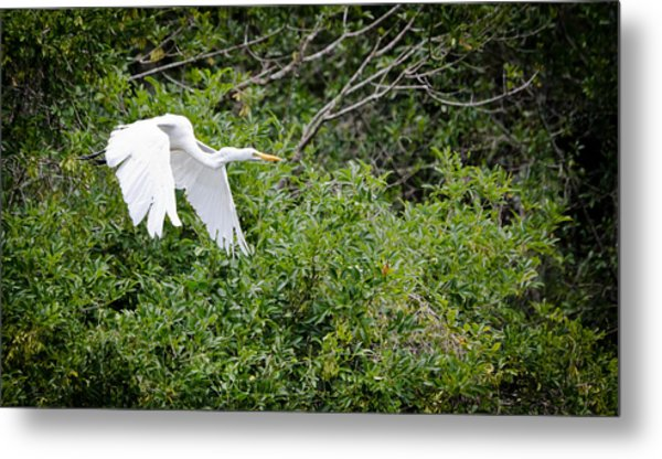Great Egret Metal Print by Mike Rivera