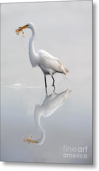 Great Egret With Lunch Metal Print