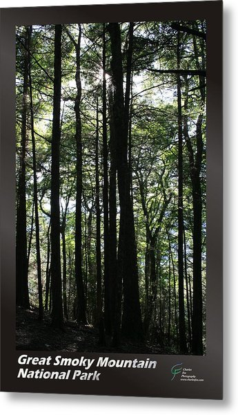Great Smoky Mountains Np 003 Metal Print by Charles Fox