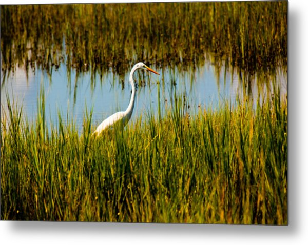 Greater Egert Metal Print by Michael Ray