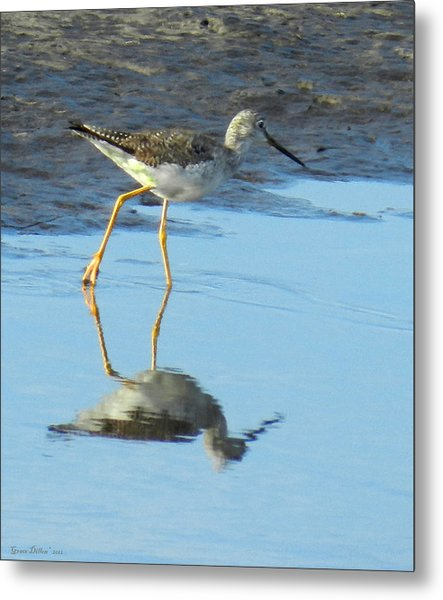 Metal Print featuring the photograph Greater Yellow Legs by Grace Dillon