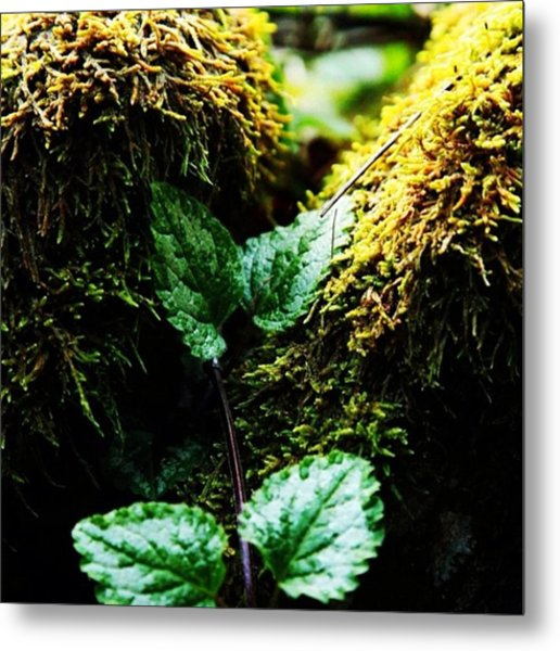 #green # Plants #nature #country Metal Print