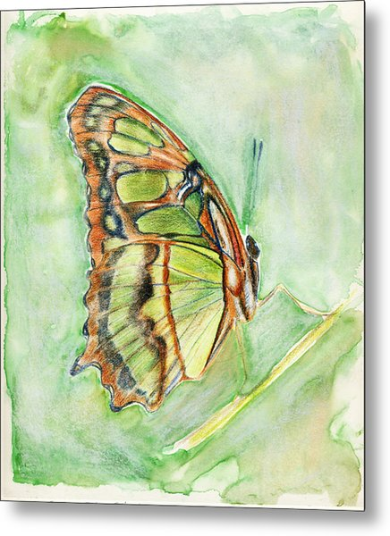 Green Butterfly Metal Print by Linda Pope