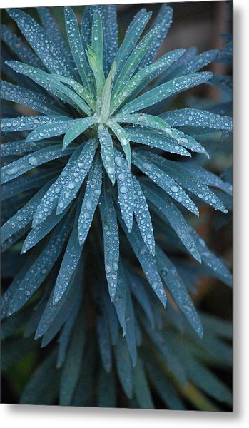 Green Dew Metal Print by Dickon Thompson
