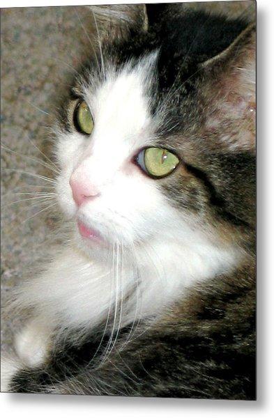 Green-eyed Cat Metal Print by Inga Smith