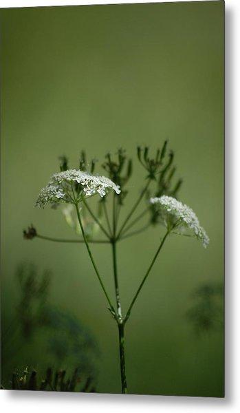 Green Garden Metal Print by Dickon Thompson