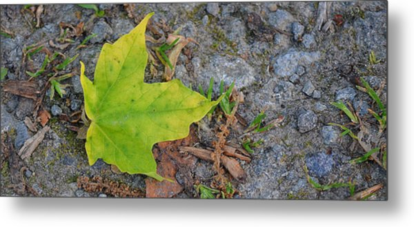 Green Leaf On Ground Metal Print