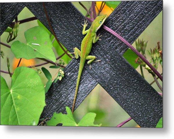Green Lizard On Fence Metal Print by Terri Albertson